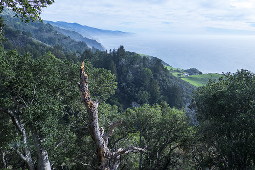 2014Nov_BigSur016 | by emmafern