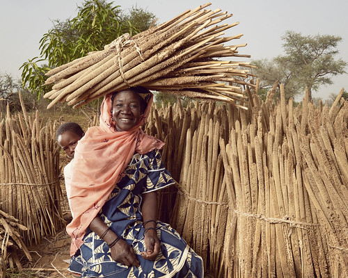 Portrait of Abou amid millet stalks dried in the sun | by World Bank Photo Collection