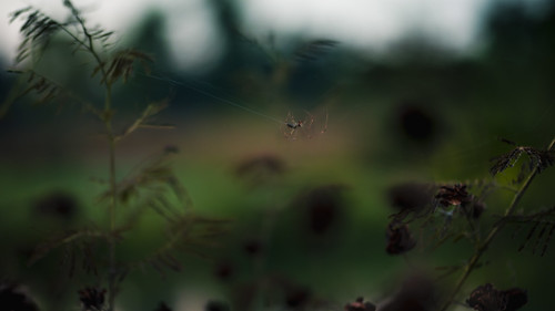 quickly,  in the crepuscular light, she spun a web over the water | by amy buxton