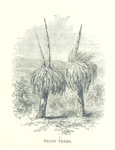 Image taken from page 187 of '[La Maison John Bull et Cie.] John Bull & Co. The Great Colonial Branches of the Firm: Canada, Australia, New Zealand and South Africa' | by The British Library