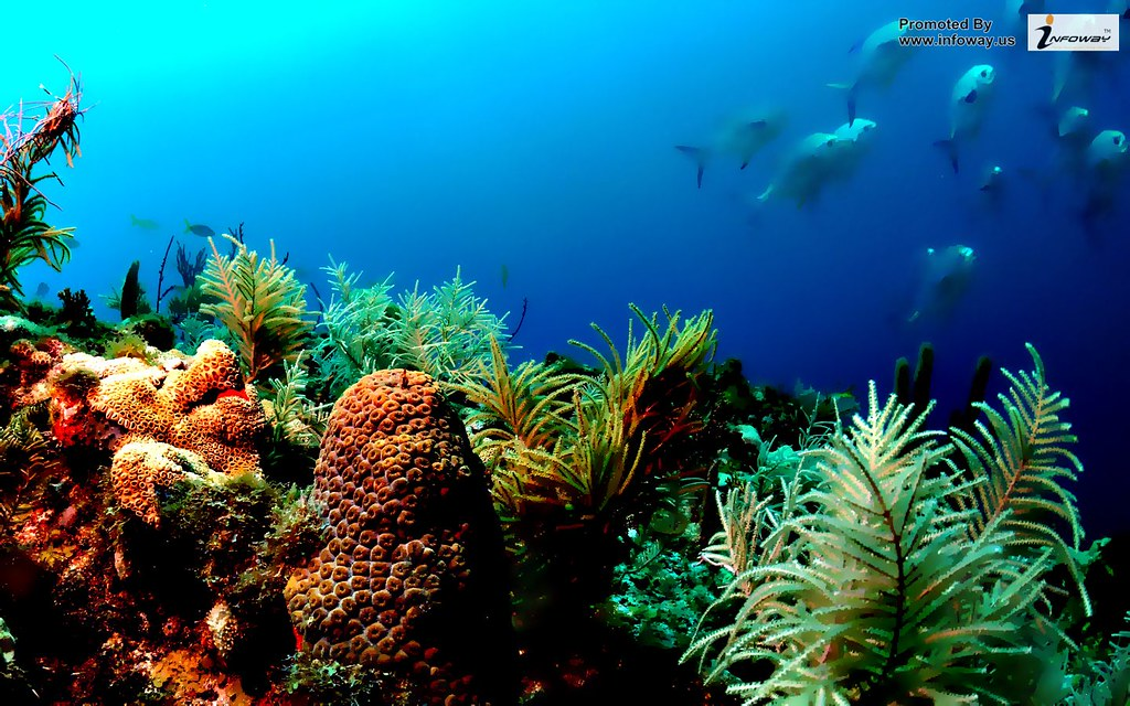 Ocean Life Sea Coral Under Water Fish Hd Wallpaper