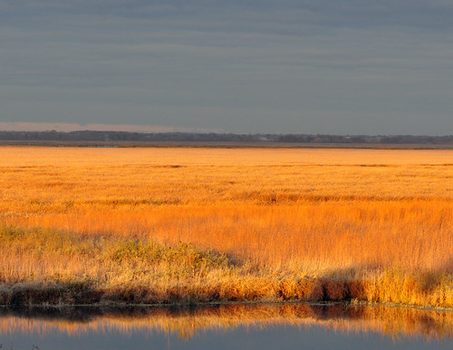 Marsh of Gold - Horicon National Wildlife Refuge | by U.S. Fish and Wildlife Service - Midwest Region