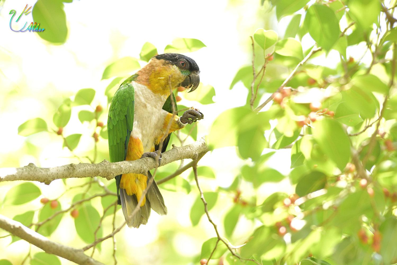Parrot_2280