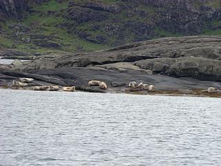 080 Zeehonden