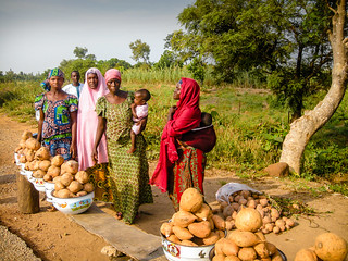 Women in Nigeria grow and sell orange-fleshed sweet potatoes, which are high in vitamin A | by Community Eye Health