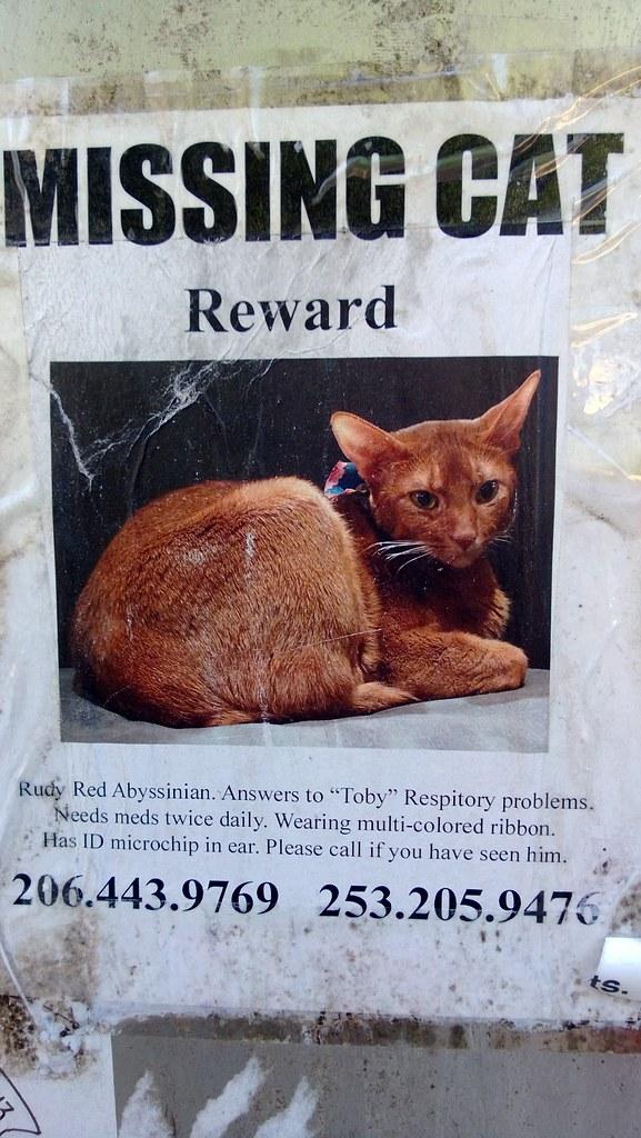 Missing Cat Cute Cat 2017
