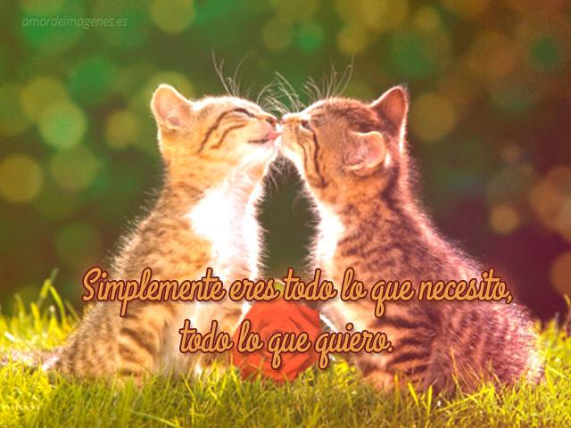 Imágenes De Gatos Con Frases De Amor Para Descargar Gratis Flickr