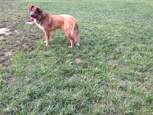 Northside Dog Park Richmond Va