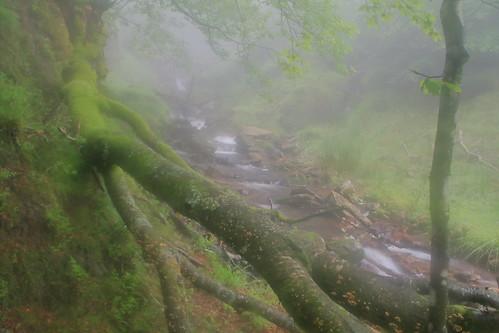 Parque natural de #Gorbeia #Orozko #DePaseoConLarri #Flickr -100