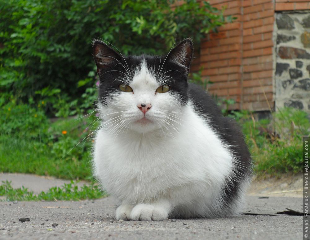 20160614_lutsk_cat_002