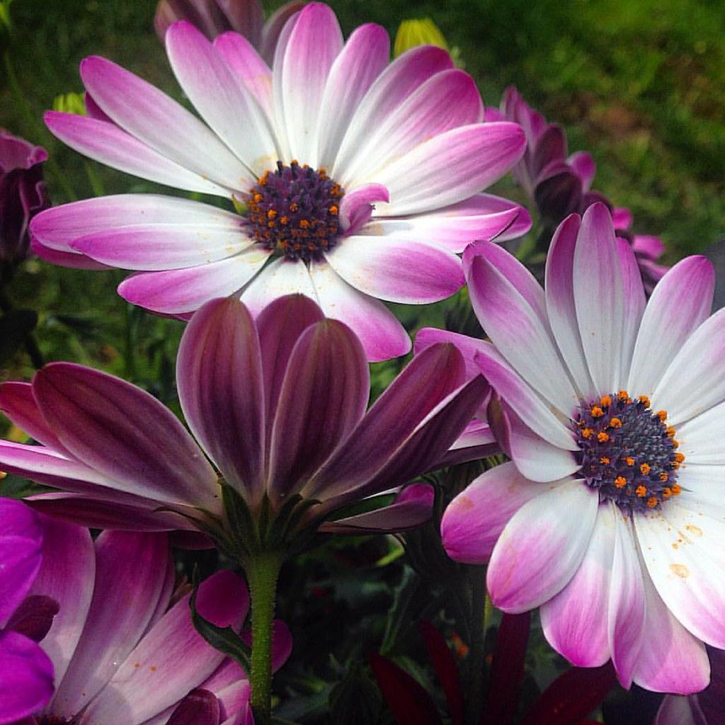 Flowers Pink Petals Pollen Summertime Uk Nicola Yeo Flickr