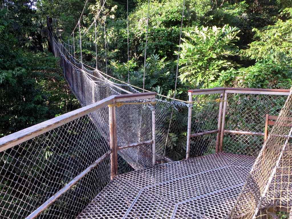 ... Iwokrama Canopy Walkway | by D-Stanley & Iwokrama Canopy Walkway | The 154-meter Iwokrama Canopy Walku2026 | Flickr