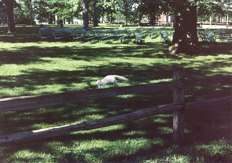 Home of the White Squirrels - Olney, IL