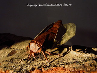 Cicada - 3° international origami internet olympiad | by Adri 79