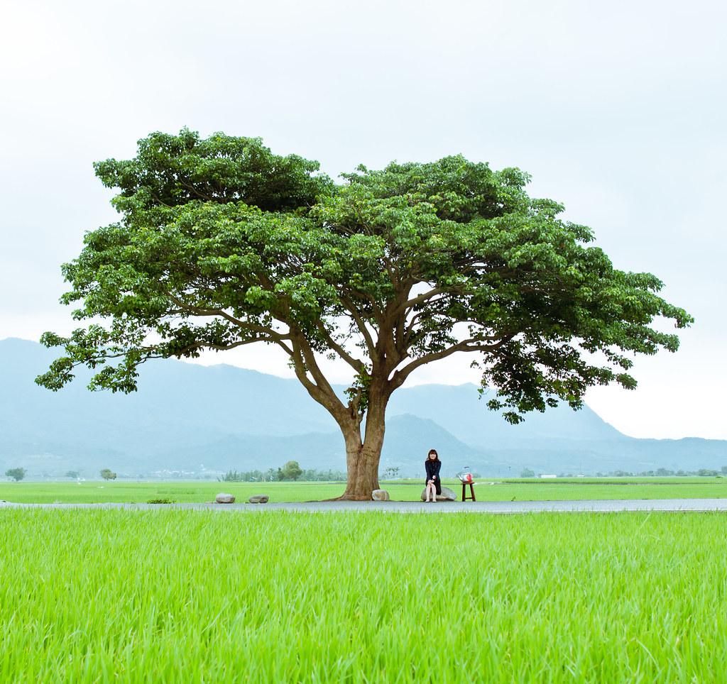 Green Mood。伯朗大道--金城武樹...