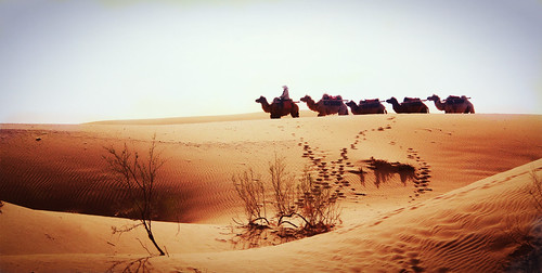 Marched with camels | by Meko.c