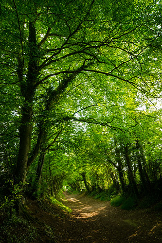 Halnaker Path | by Richard Paterson
