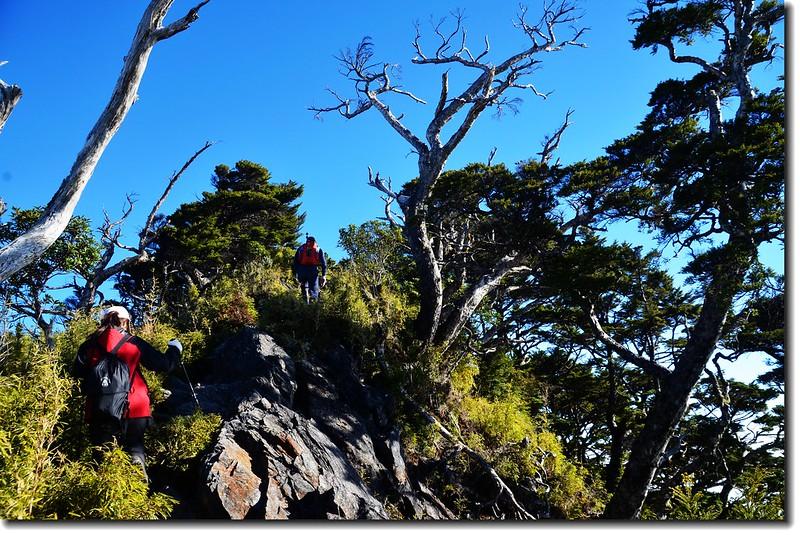 北大武山登山步道 5