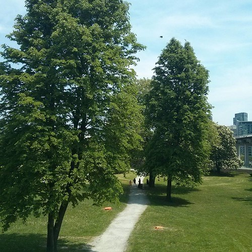 Into Fort York from Strachan #toronto #doorsopen #blogtodot16 #trees #fortyork