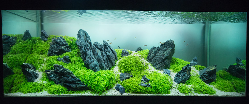 ... My Nature Aquascape, International Aquatic Plants Layout Contest  2014(result 79 | By Yuuki222