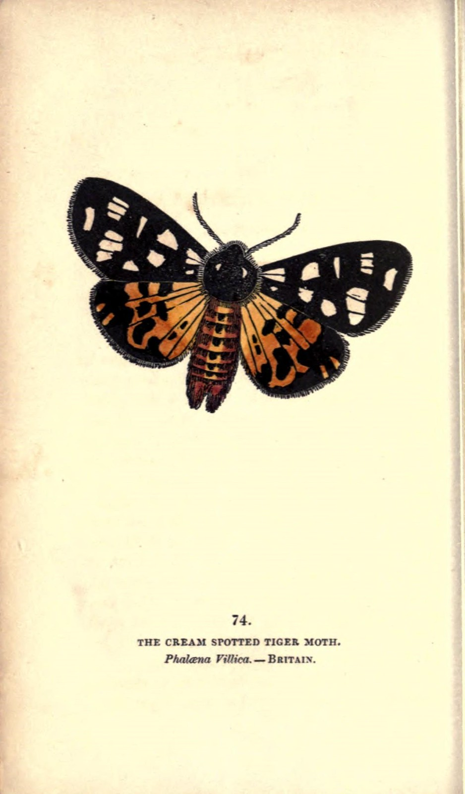 Moths Book (New Naturalist Series; no.30) (E. B. Ford - 1955) (ID:57141)