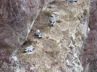 021 Vogelnesten bij St Abs head