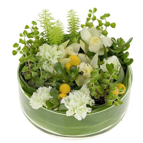 Succulent dish garden leanne and david kesler floral de for Succulent dish garden designs