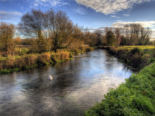 Swans in the River Itchen on the Water Meadows at Winchester | by neilalderney123