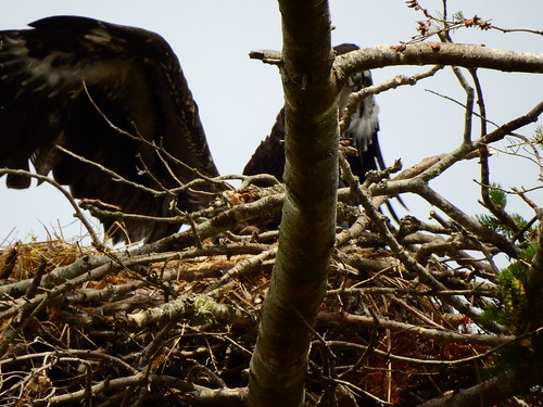 june 16 2016 15:11 - Dunlop Eaglet | by boonibarb