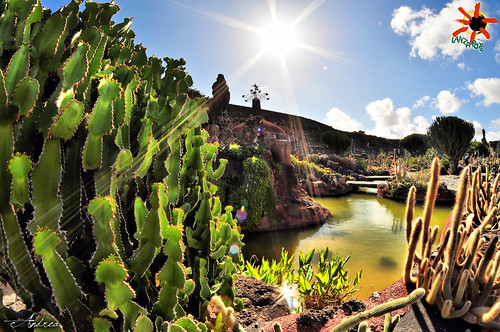 Lanzarote giardino dei cactus canarie all rights for Giardino 3d gratis italiano