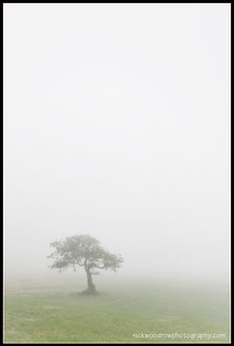 North Devon Mist | by Nick Woodrow: Thanks for all of your comments