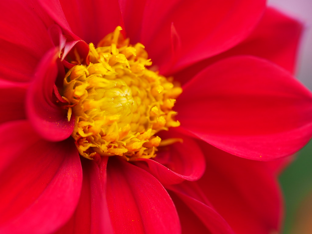 Red And Yellow Flower Katherinerockphotos Flickr