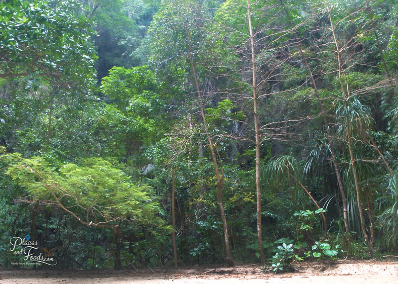 emerald cave trang jungle within island