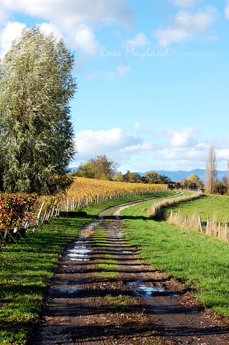 An Autumn Walk Through The Vineyards | by Rosa's Yummy Yums