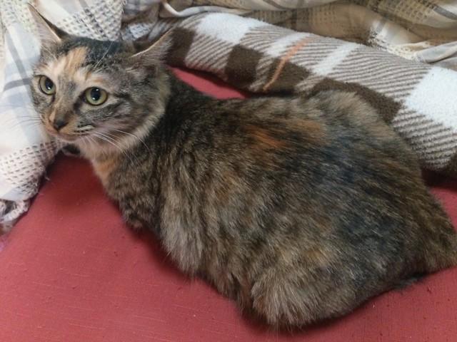保護した猫のしっぽちゃんが肥満体型になってしまいました