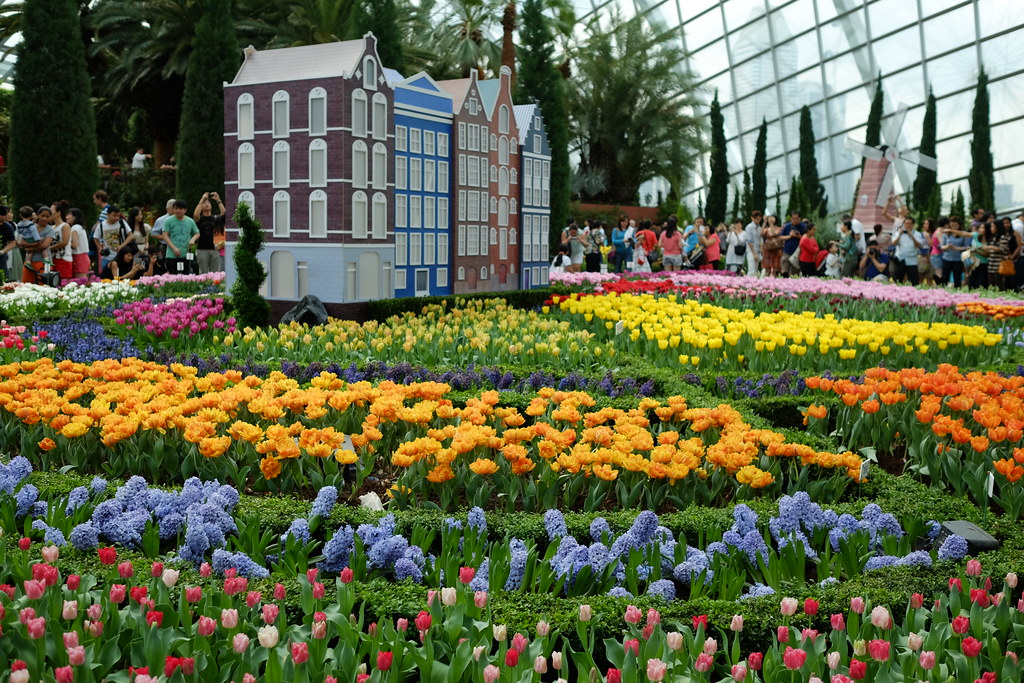 Tulipmania : Gardens by the Bay : 20 April 2014