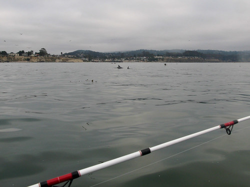 Fins capitola fishing sean reynolds flickr for Capitola fishing report