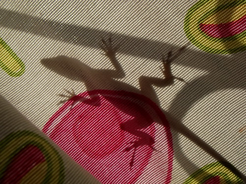 Gecko's shadow | by luisjromero