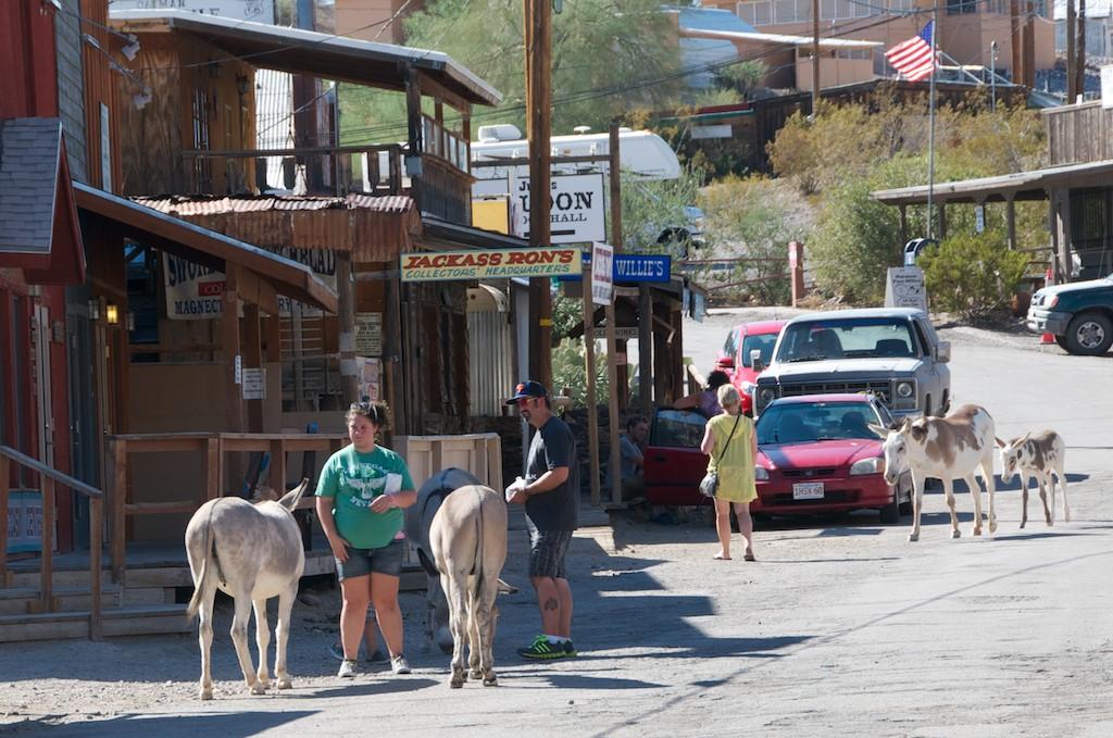 Feral Donkeys in Oatman, Arizona