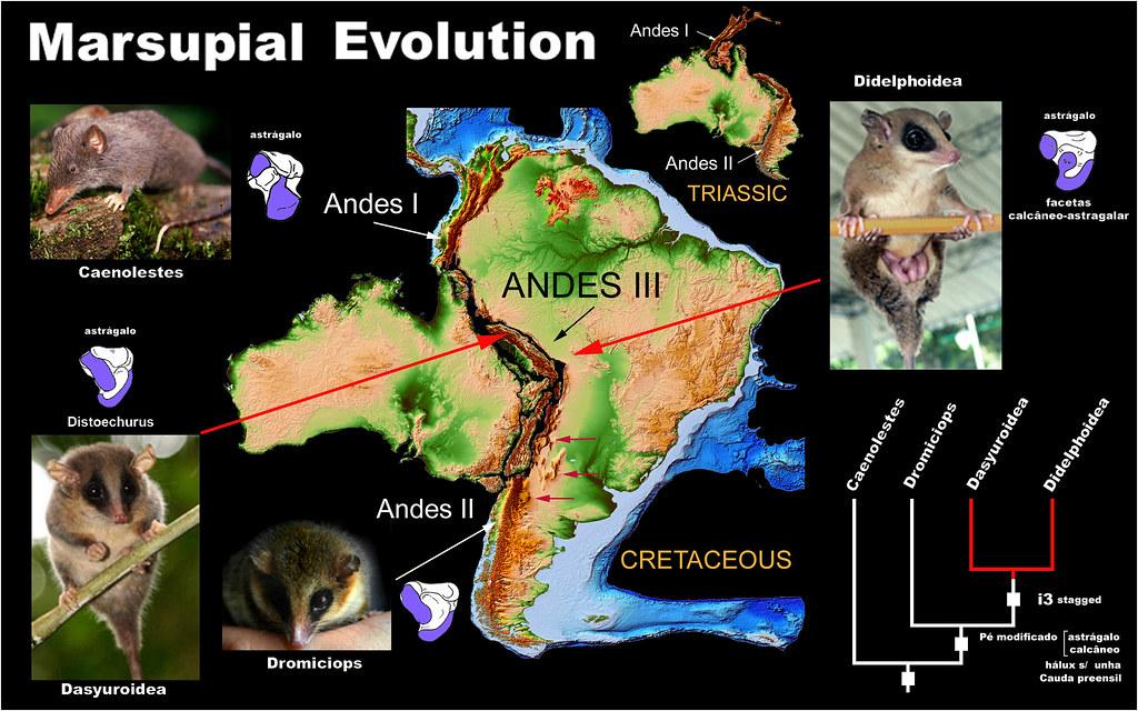 Evolution 14 | BiologyWriter