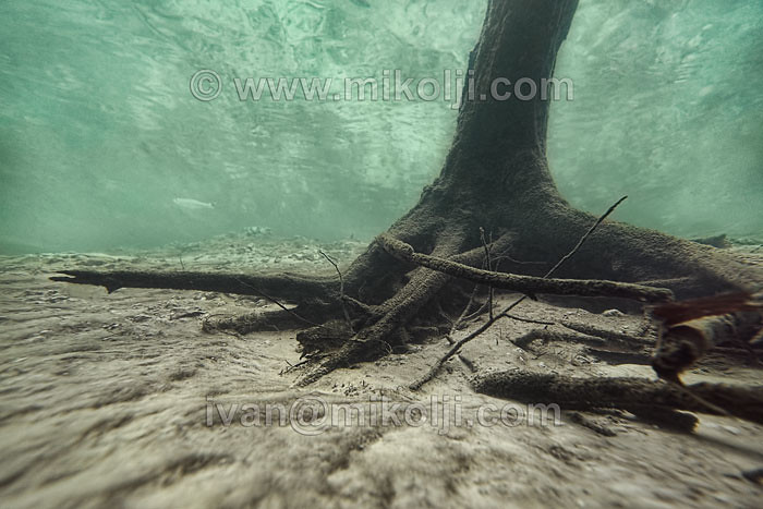 Freshwater Underwater Photography Tropical Aquarium Fish A Flickr