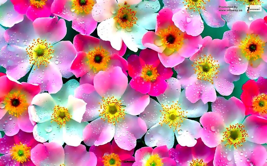 Pink flowers wallpapers pink flowers wallpapers flickr pink flowers wallpapers by wonderful beautiful photograph images mightylinksfo
