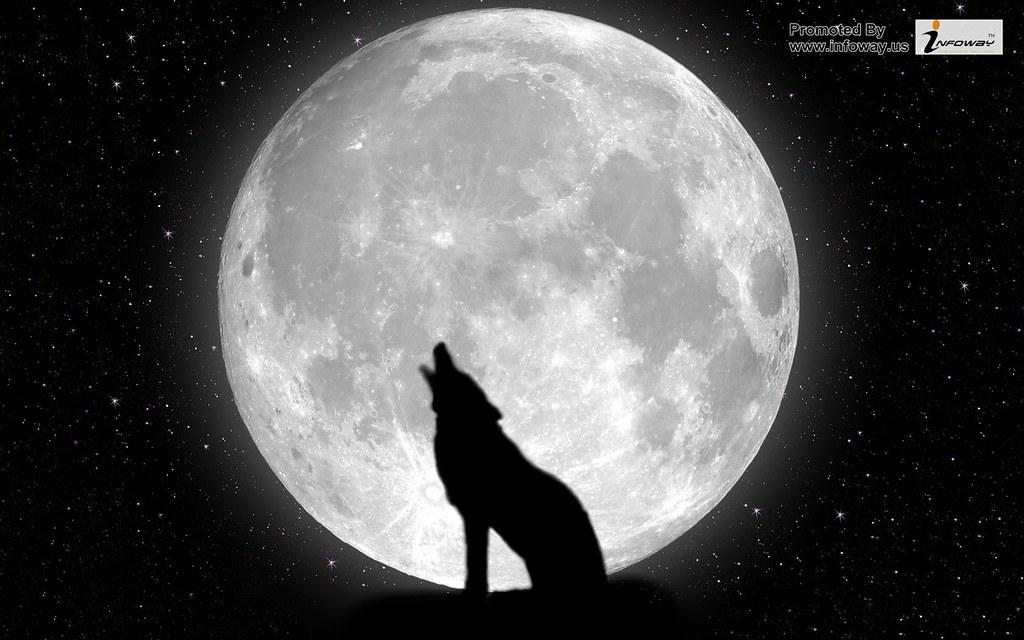 Wolf Wallpaper Widescreen By Shironranshiin