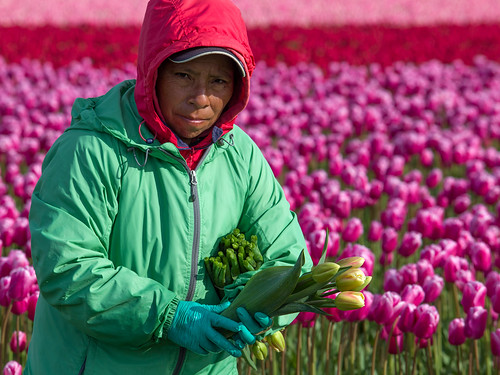 Skagit Valley - Migrant Farm Workers | by Bill Anderson :-)