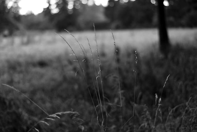 Summer grasses13