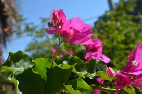Lila Blüten.