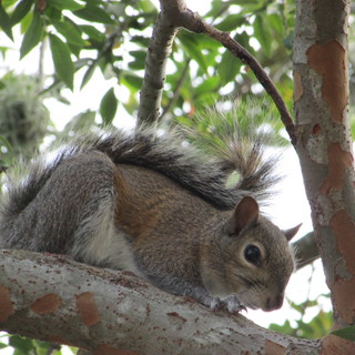 Squirrel | by Ruthie'sRoutes