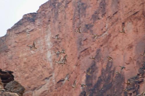 Grand Canyon Rafting Photo Tour