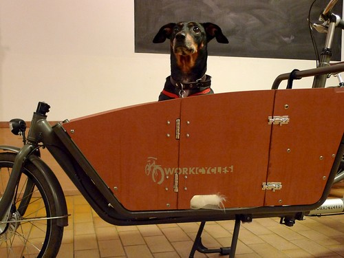 WorkCycles-Kr8-Doggie-Door 6