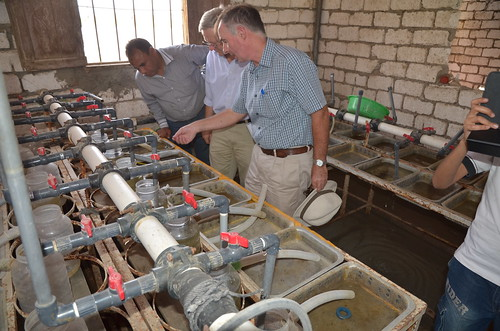 Visit to tilapia hatchery in Fayoum, Egypt. Photo by Jens Peter Tang Dalsgaard, 2013.